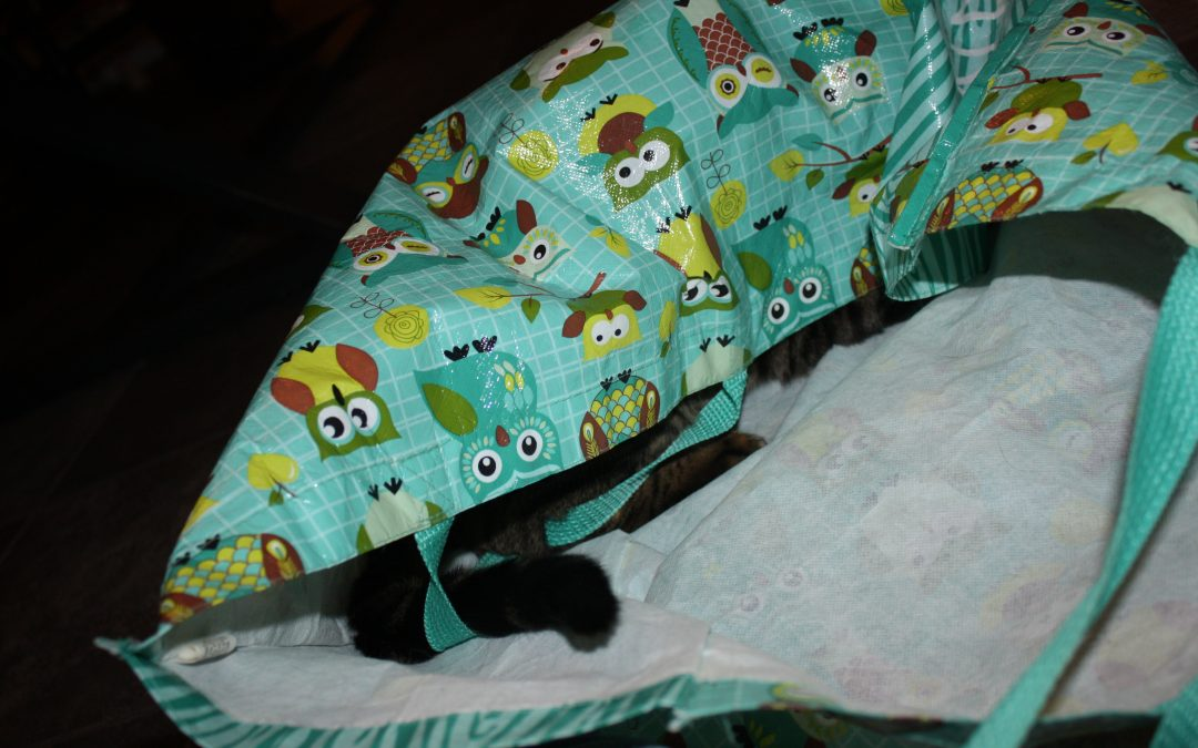 101 Reasons my cat is a JERK cont…(C)