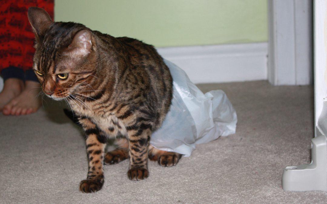 10 Reasons my cat is a JERK!